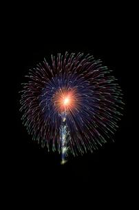 土浦全国花火競技大会の10号玉で昇曲付四重芯変化菊の写真素材 [FYI02656775]