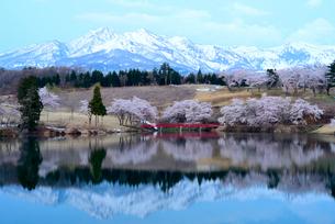 妙高山と松ヶ峯周辺の桜の写真素材 [FYI02656875]