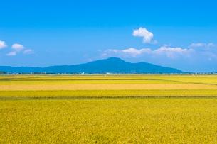 角田山と秋の田園風景の写真素材 [FYI02656990]