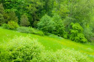 ペレシュ城の庭園の写真素材 [FYI02657008]