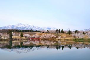 妙高山と松ヶ峯周辺の桜の写真素材 [FYI02657052]