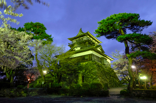 丸岡城と桜の写真素材 [FYI02657162]