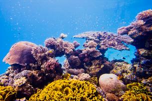水中展望台 サンゴの写真素材 [FYI02657264]