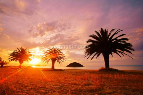 小部ビーチとナツメヤシと夕日と小島の写真素材 [FYI02657376]