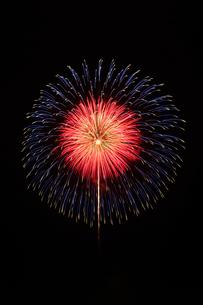 とりで利根川花火大会の割物の写真素材 [FYI02657389]