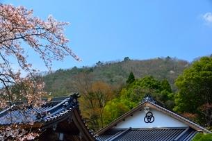 桜咲く竹田城 寺町通り 竹田城跡を見るの写真素材 [FYI02657484]