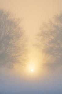 朝霧のブナ林の写真素材 [FYI02657520]