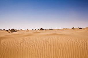 タクラマカン砂漠の写真素材 [FYI02657600]