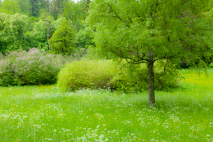 ペレシュ城の庭園の写真素材 [FYI02657681]