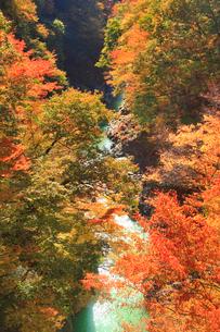 渓谷パーキング付近から望む紅葉の吾妻渓谷上流方向の写真素材 [FYI02657690]