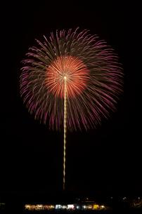 土浦全国花火競技大会の10号玉で昇り曲導付八重芯変化菊の写真素材 [FYI02657718]