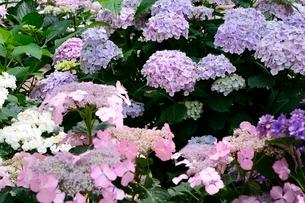 松江 フォーゲルパーク園内のセンターハウスの花の写真素材 [FYI02657742]
