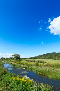三面川中州公園の写真素材 [FYI02657894]