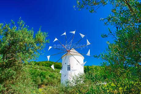 オリーブとギリシャ風車の写真素材 [FYI02657984]
