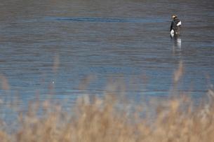 結氷した達古武湖上のオオワシの写真素材 [FYI02658017]
