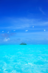 アジサシと海と無人島の写真素材 [FYI02658032]