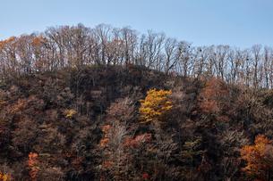 紅葉の木々の写真素材 [FYI02658195]