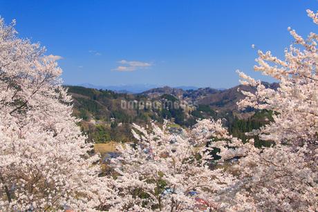 ソメイヨシノと浅間山方向の山並みの写真素材 [FYI02658434]