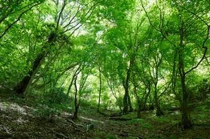 和泉葛城山ブナ林の写真素材 [FYI02658528]