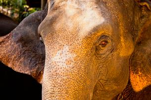 象の写真素材 [FYI02658534]