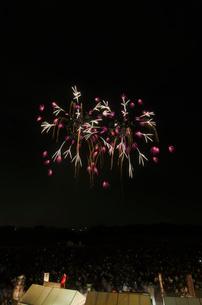 常総きぬ川花火大会の日本の花火BESTコレクションで紫陽花の写真素材 [FYI02658685]