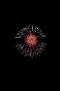 常総きぬ川花火大会 7号玉 侘分火付紅芯菊先銀光露侘残綸の写真素材 [FYI02658770]