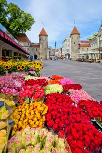 旧市街 ヴィル門と花屋の写真素材 [FYI02658785]