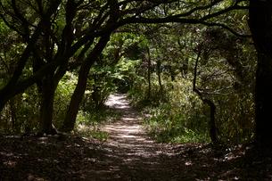 鳴川峠登山道の写真素材 [FYI02658863]