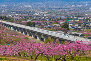 花咲く桃源郷を走るリニア中央新幹線の写真素材 [FYI02658872]