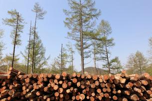間伐された材木の写真素材 [FYI02659177]