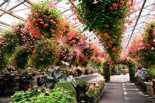 松江 フォーゲルパーク園内のセンターハウスの花の写真素材 [FYI02659204]