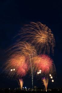 とりで利根川大花火 百花繚乱 夢で会えたらいいねの写真素材 [FYI02659308]