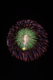 長岡まつり大花火大会の匠の花火で昇曲導付三重芯変化菊の写真素材 [FYI02659362]