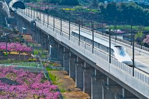 花咲く桃源郷を走るリニア中央新幹線の写真素材 [FYI02659417]