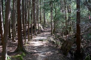 金勝アルプス登山道の写真素材 [FYI02659505]