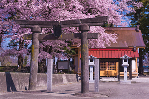 神社額束は大村智博士揮毫 武田廣神社の桜の写真素材 [FYI02659555]