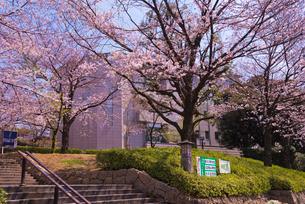 北区飛鳥山博物館と桜の写真素材 [FYI02659683]