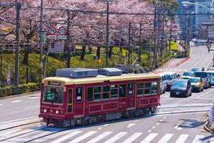 飛鳥山公園の桜と都電荒川線7707号車の写真素材 [FYI02659810]