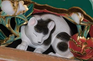 日光東照宮 眠り猫 (平成の大修理完成後)の写真素材 [FYI02659965]