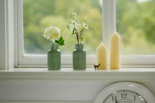 梅雨 白い花の写真素材 [FYI02660080]