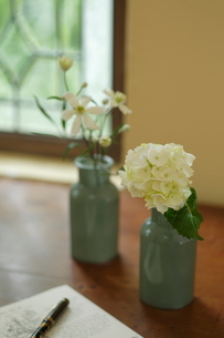 梅雨 白い花の写真素材 [FYI02660165]