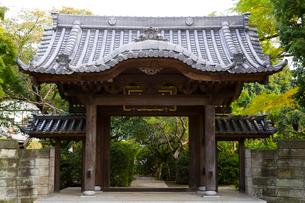 大圓寺の写真素材 [FYI02660195]
