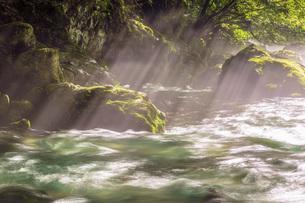円原川伏流水の光芒と流れの写真素材 [FYI02660338]