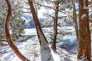 冬の志賀高原,三角池付近の雪景色の写真素材 [FYI02660371]