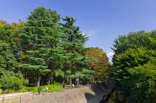 東京都立和田掘公園の写真素材 [FYI02660698]