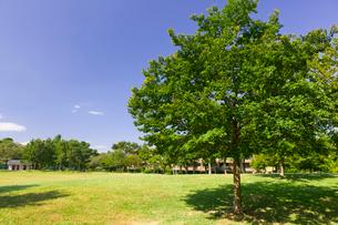杉並区立柏の宮公園の写真素材 [FYI02660852]