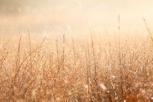 朝霧に包まれた草原の写真素材 [FYI02660894]