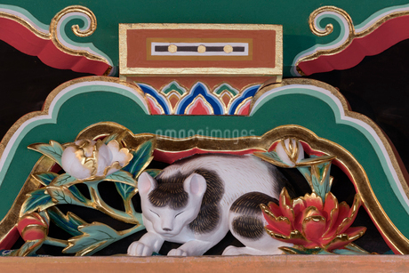 日光東照宮 眠り猫 (平成の大修理完成後)の写真素材 [FYI02660948]