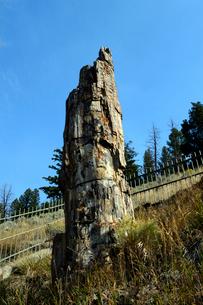 イエローストーン国立公園のルーズベルトカントリーの珪化木の写真素材 [FYI02661011]