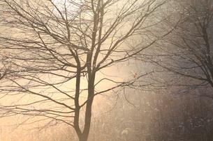 朝霧に包まれた野辺の写真素材 [FYI02661135]